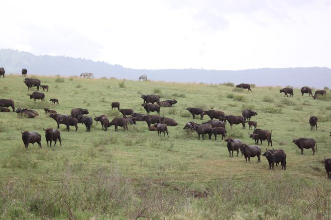 Africa-115.jpg