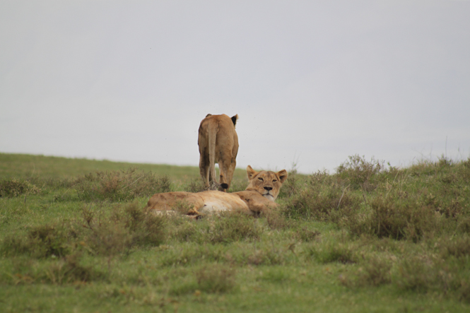 Africa-123.jpg