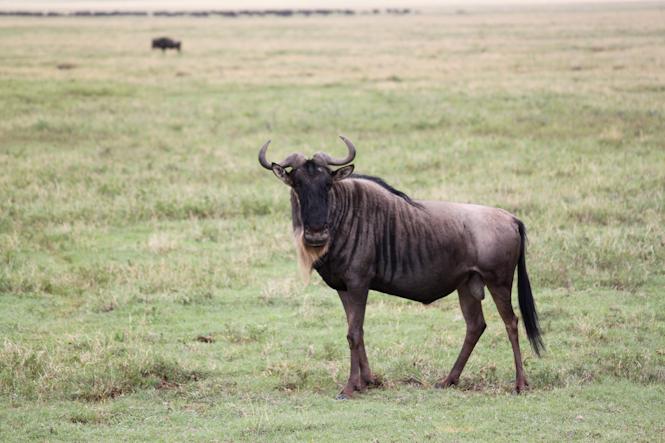 Africa-142.jpg