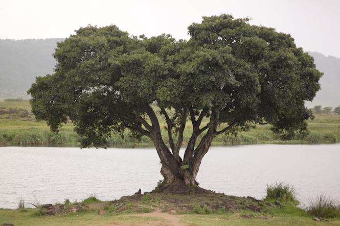 Africa-157.jpg