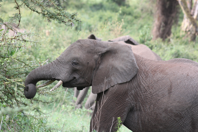 Africa-199.jpg