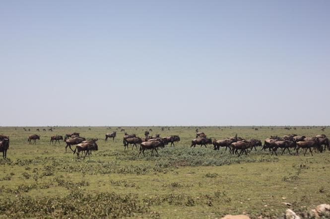 Africa-266.jpg