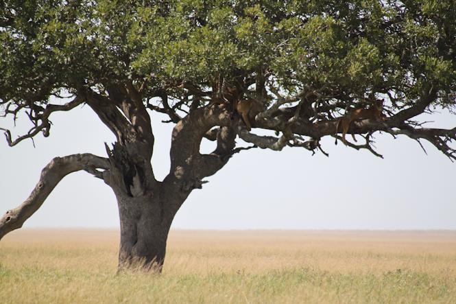 Africa-324.jpg