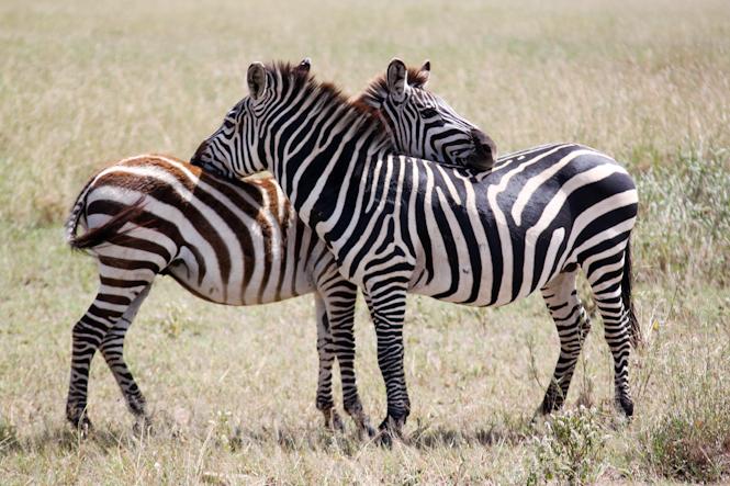 Africa-73.jpg
