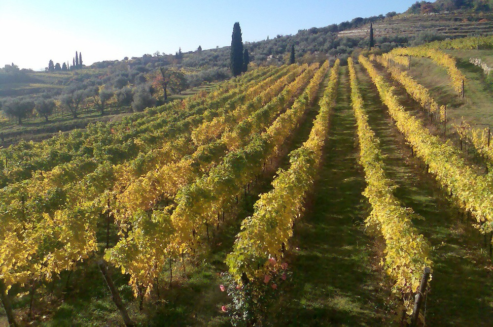 Valpolicella vineyards in autumn