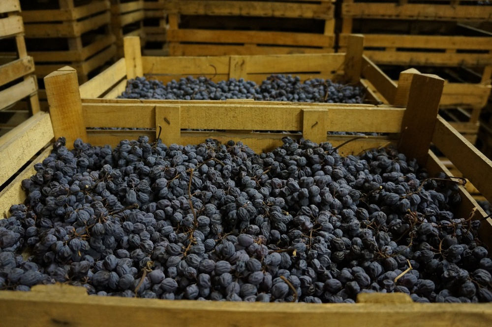 Corvina grapes drying in Valpolicella