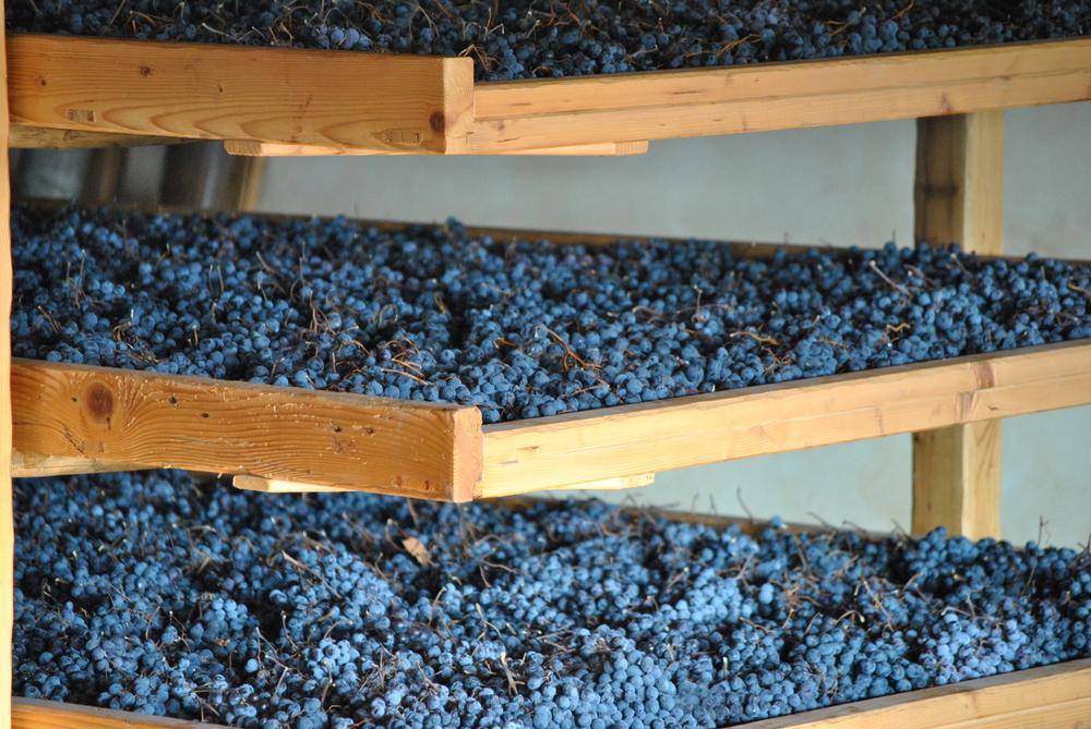 Valpolicella grapes drying on bamboo cane mats - Photo courtesy of Claudio Oliboni