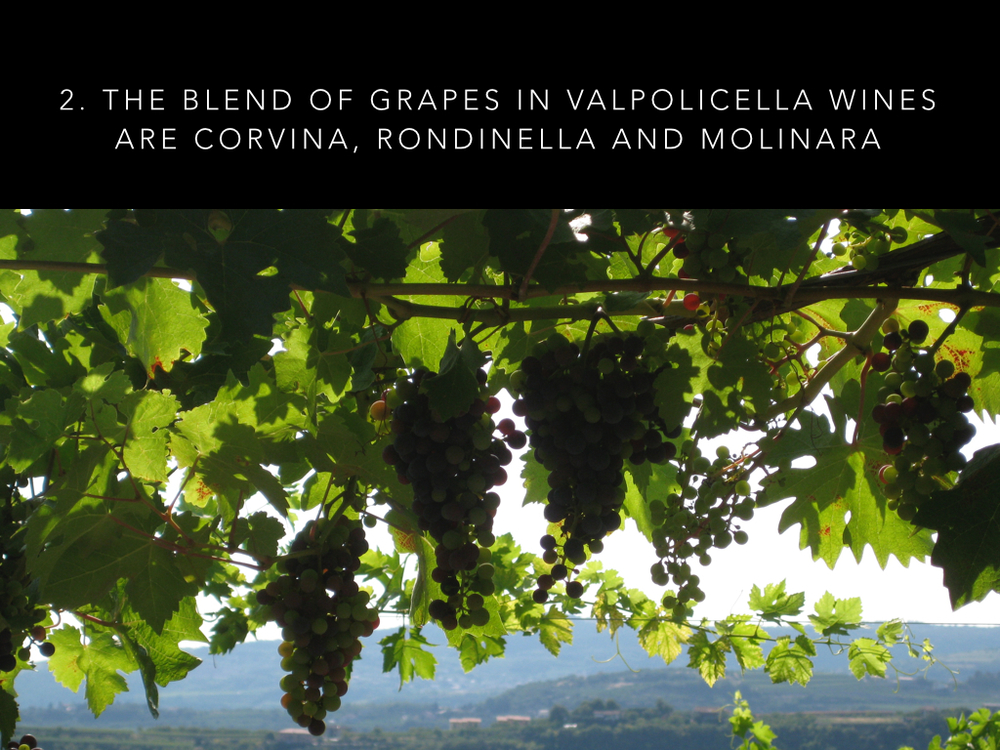 9 Valpolicella facts.003.jpg