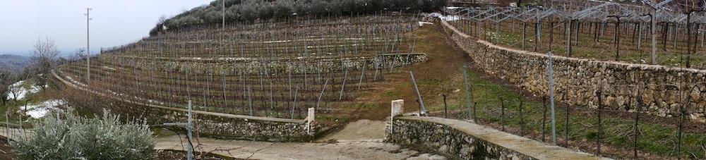 Terre di Leone vineyard over Marano