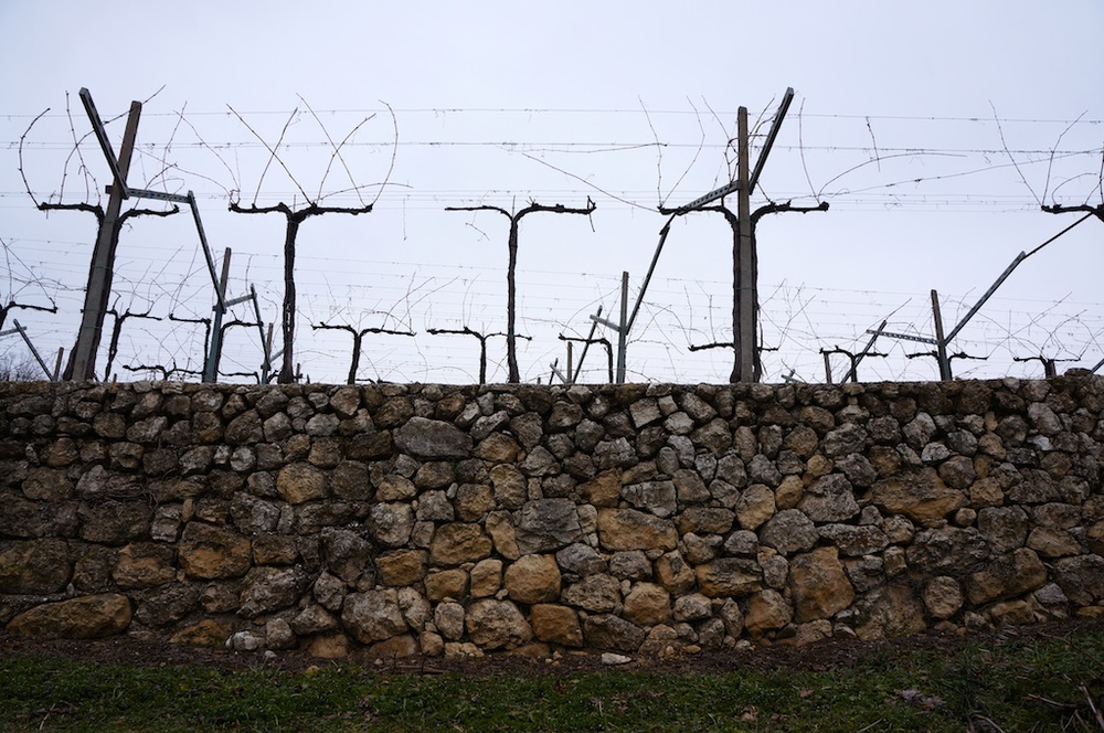 Older vines in Marano