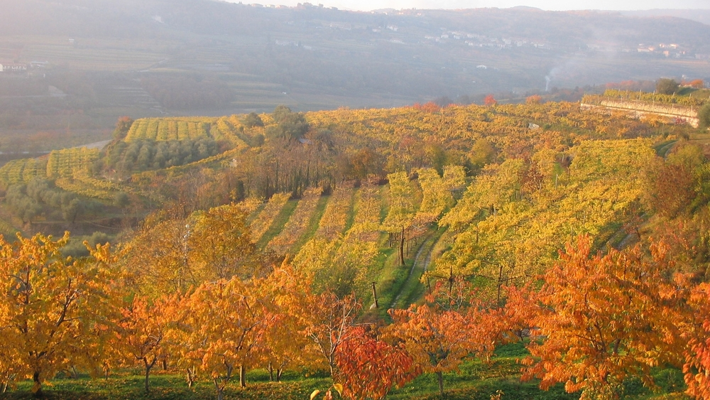 Autumn in Valpolicella - Photo courtesy of Claudio Oliboni