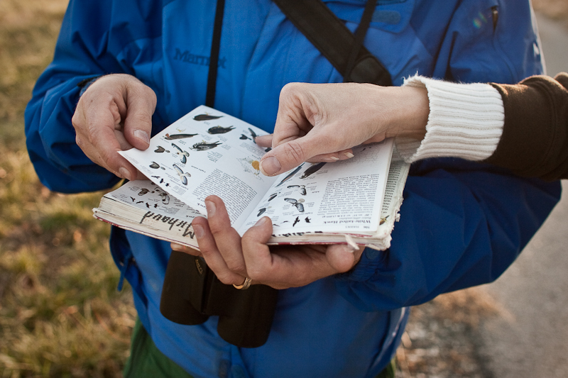 Most birders carry with them a field guide for quick reference to confirm tough identifications. The Sibley Guide to Birds (shown here) is a favorite for many.