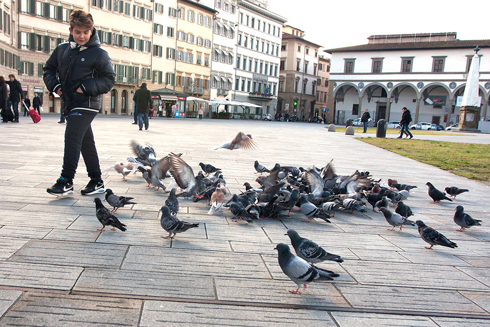 Pigeon Chasing, Florence