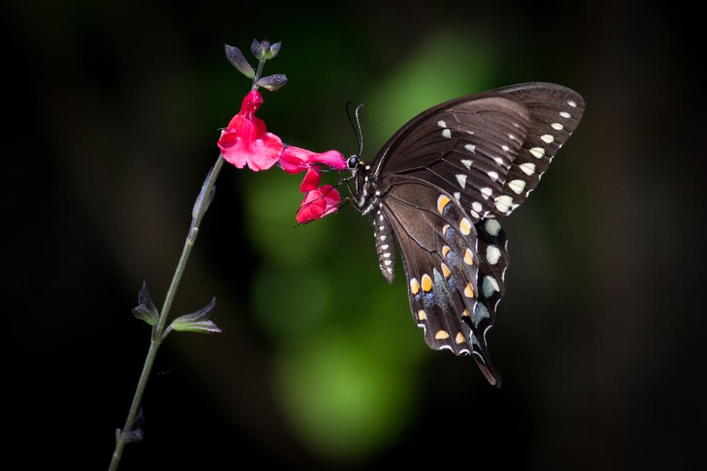 butterfly_long_island.jpg