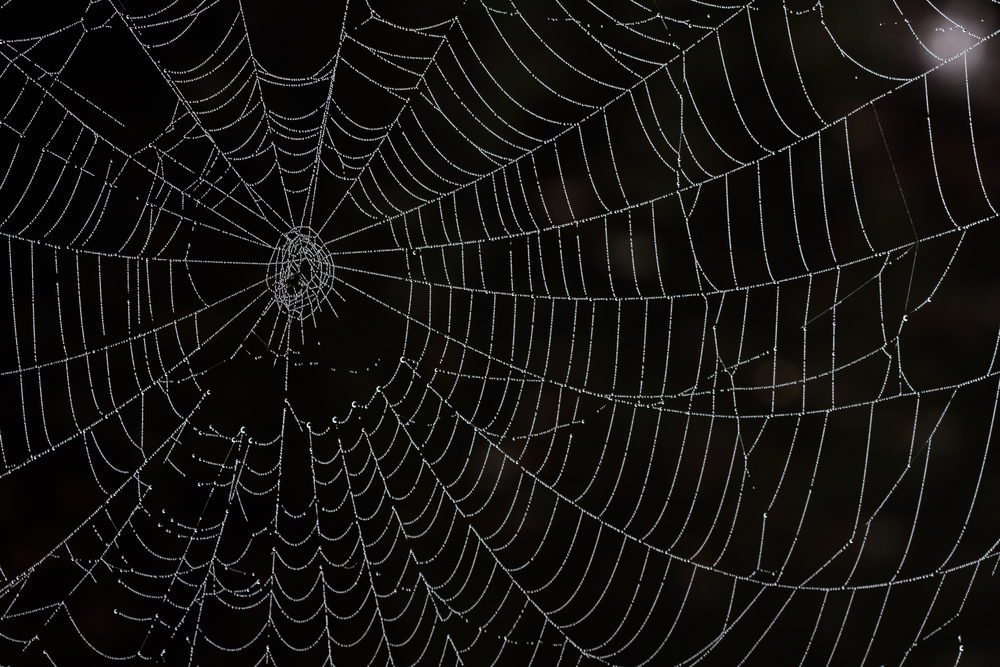 spiderweb_with_dew.jpg