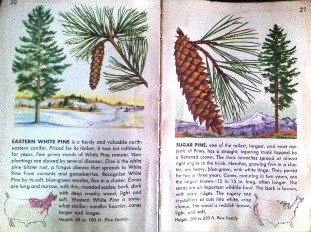 pine_page.jpg