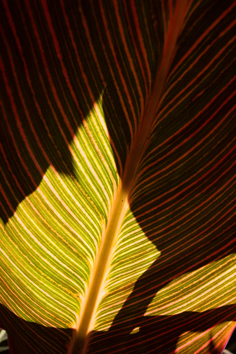 Shadows and patterns on a backlit leaf.