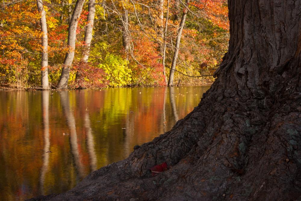 2005_Caumsett_State_Park_Autumn.jpg