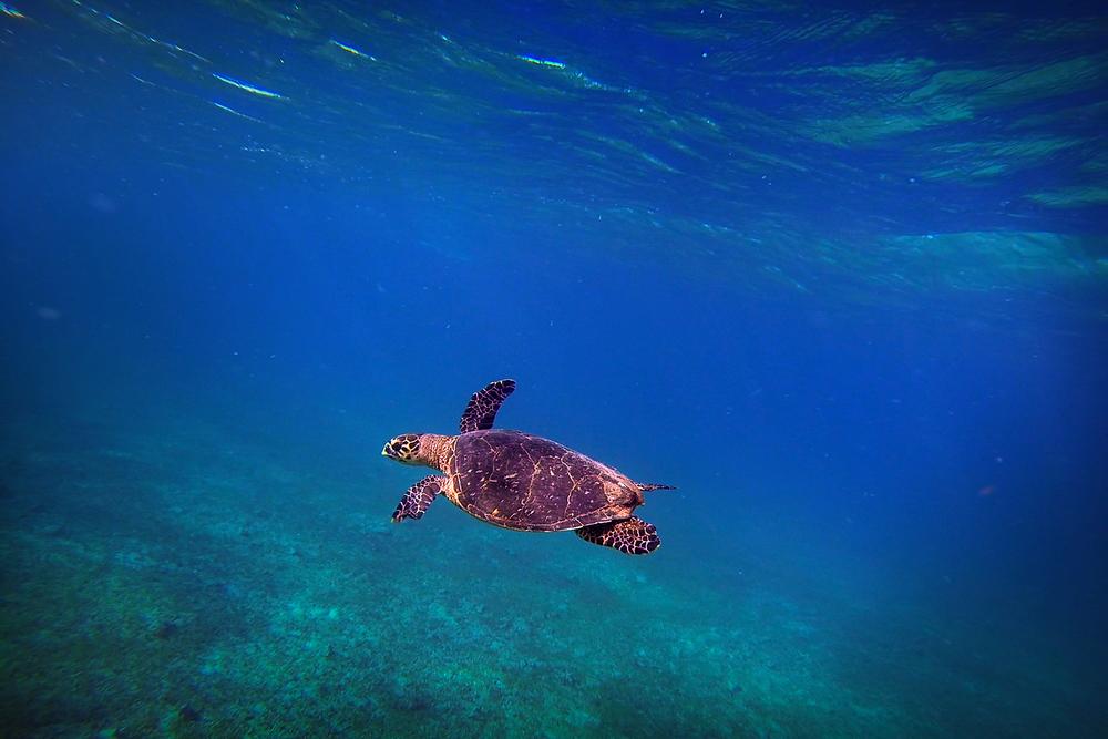 sea_turtle_1_2014.jpg
