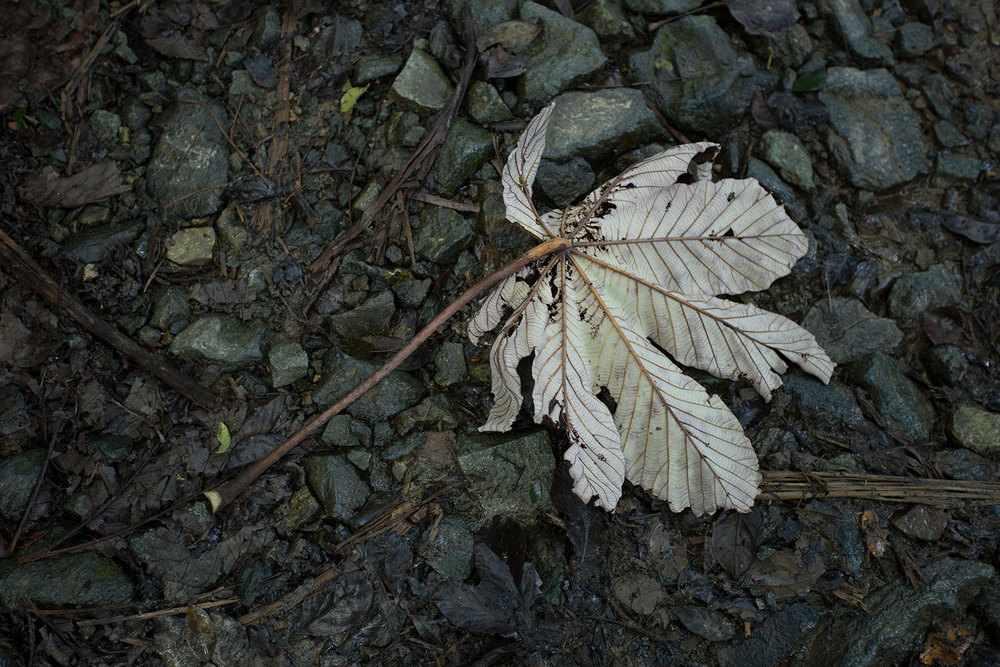 Lone leaf on muddy rocks