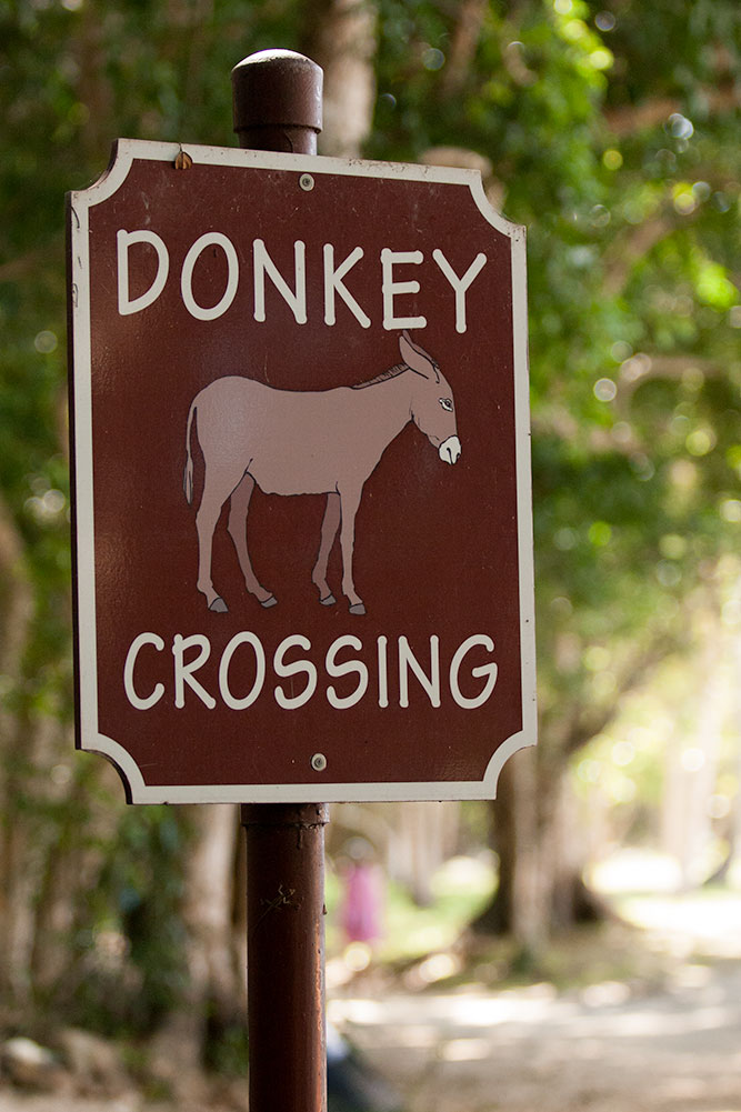 donkey_crossing.jpg