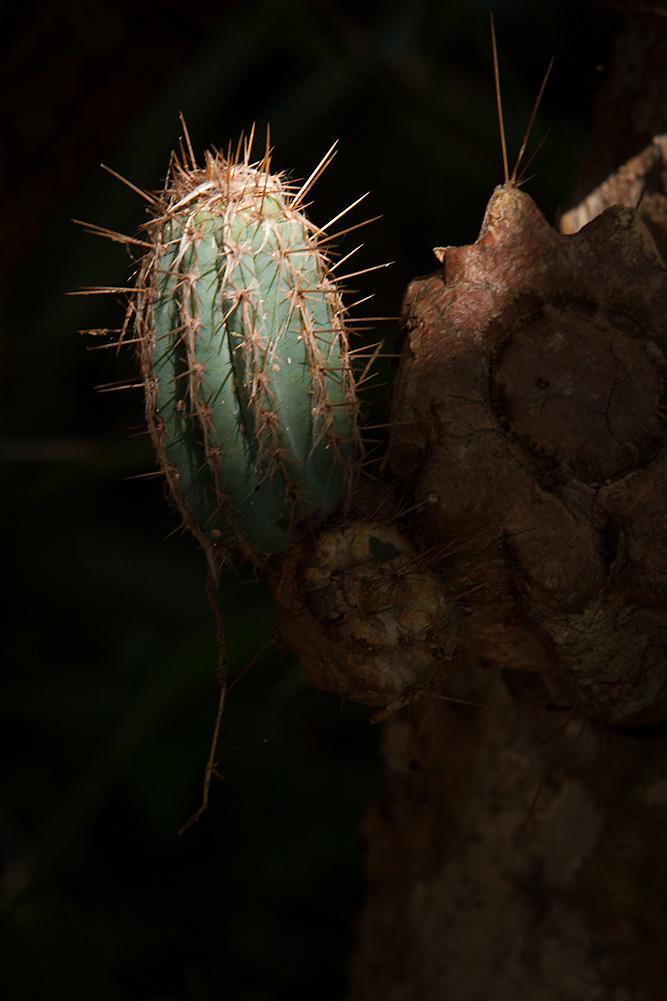 cactus_shadow.jpg