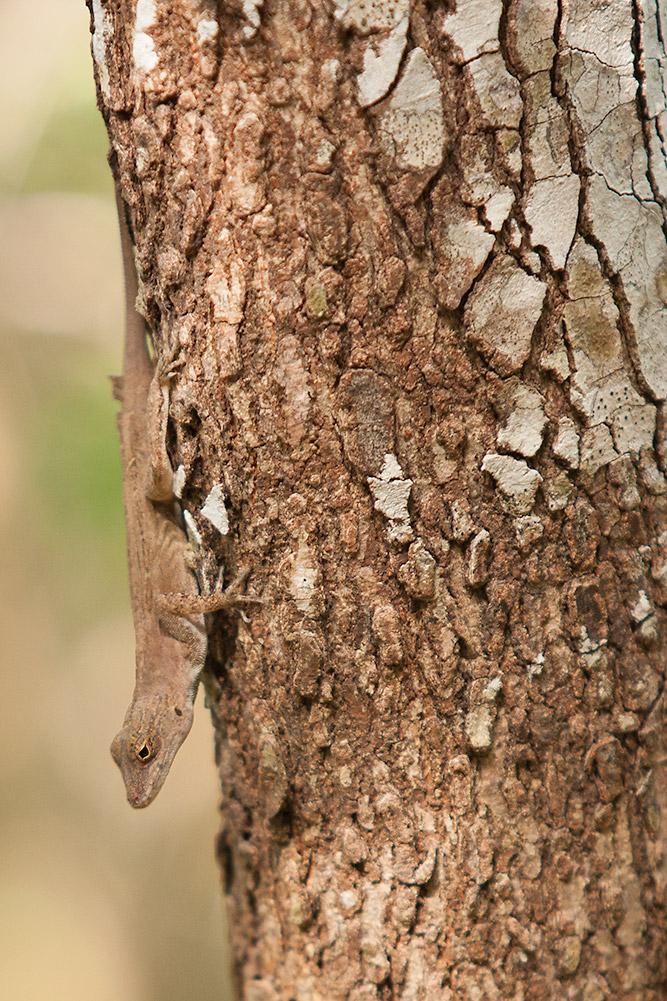 lizard_tree.jpg