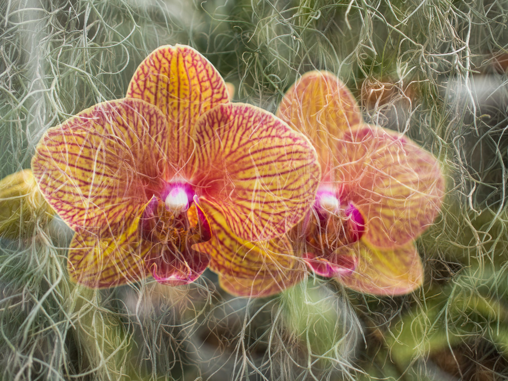 orchid_moss_double_exposure