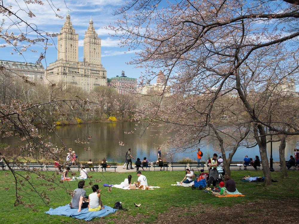 central-park-blossoms-april-2015