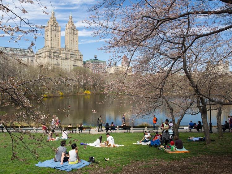central-park-blossoms-april-2015.jpg