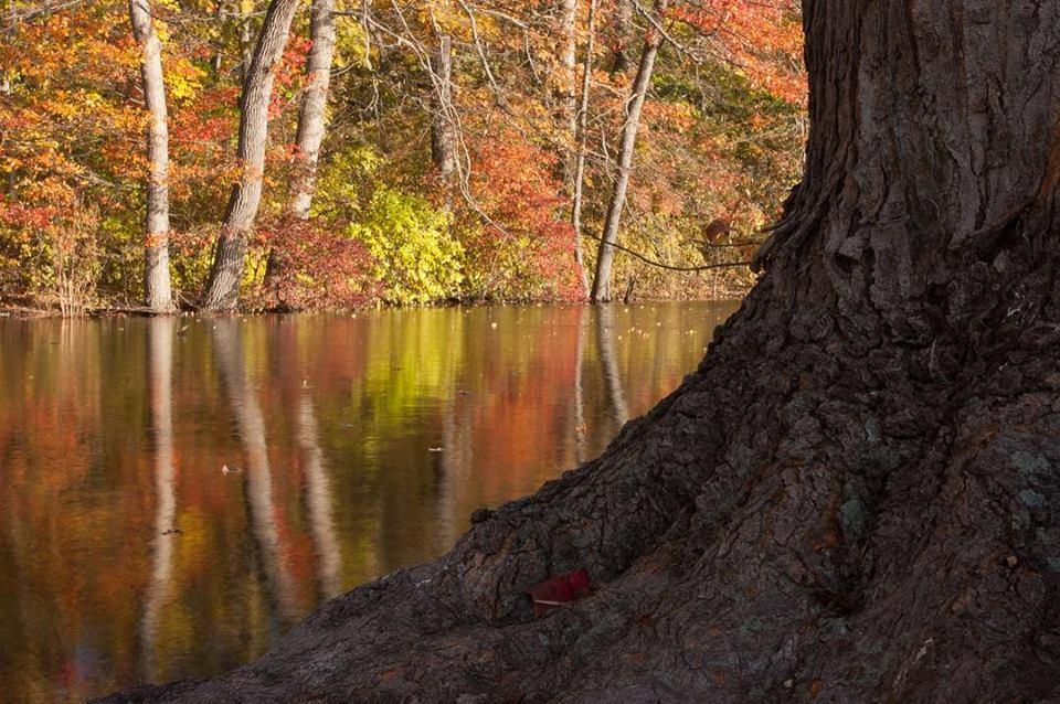 caumsett-autumn.jpg
