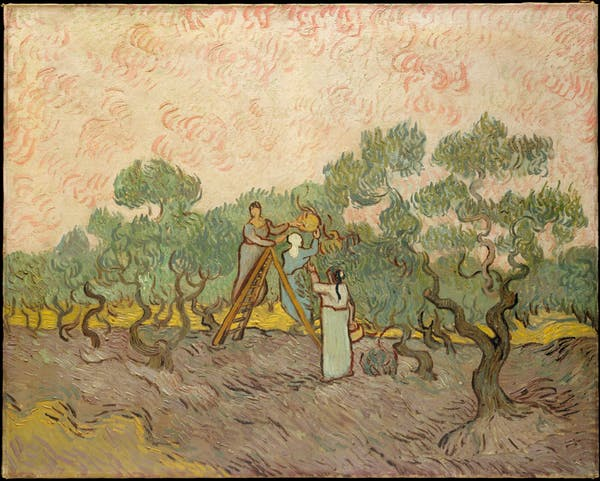 Women Picking Olives by Vincent Van Gogh (1889)
