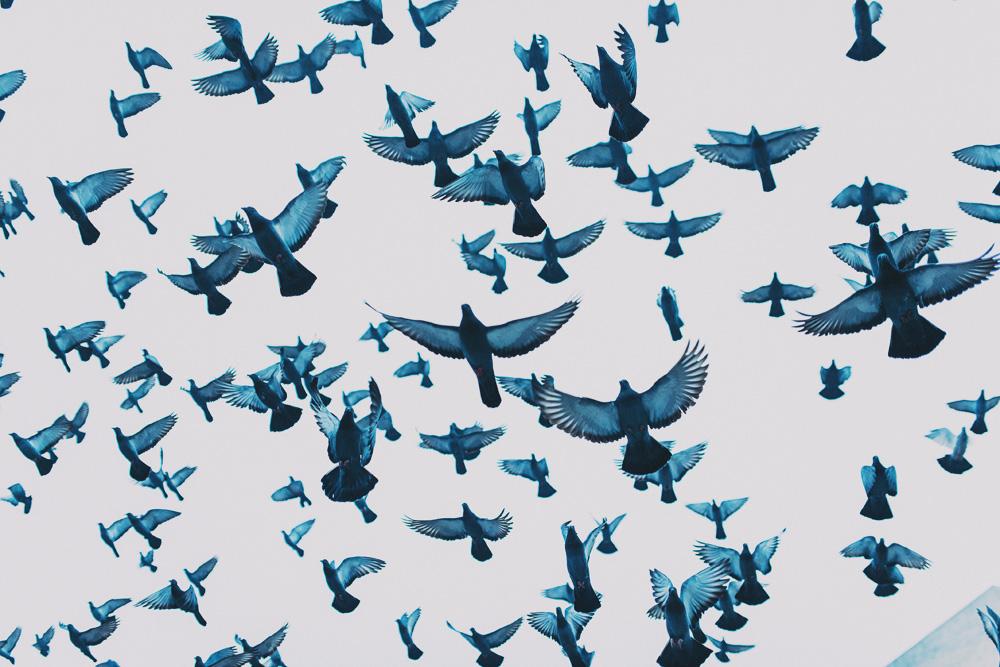 birds-1-copy.jpg