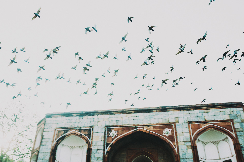 fort-birds-india.jpg