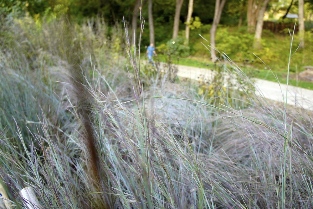 Pastel Grass.jpg