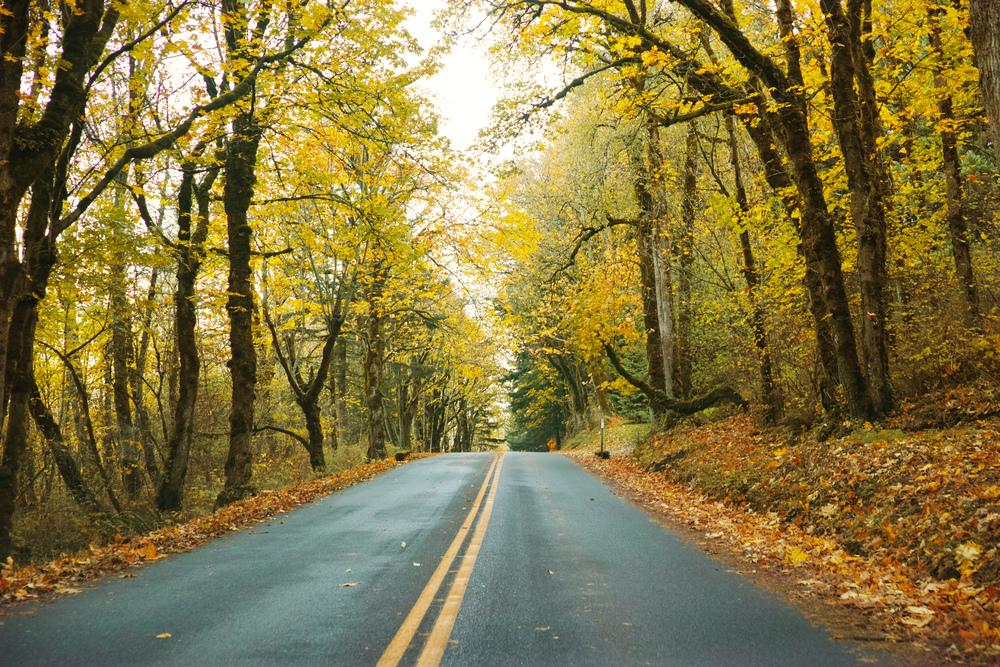 Road That Should Be Traveled