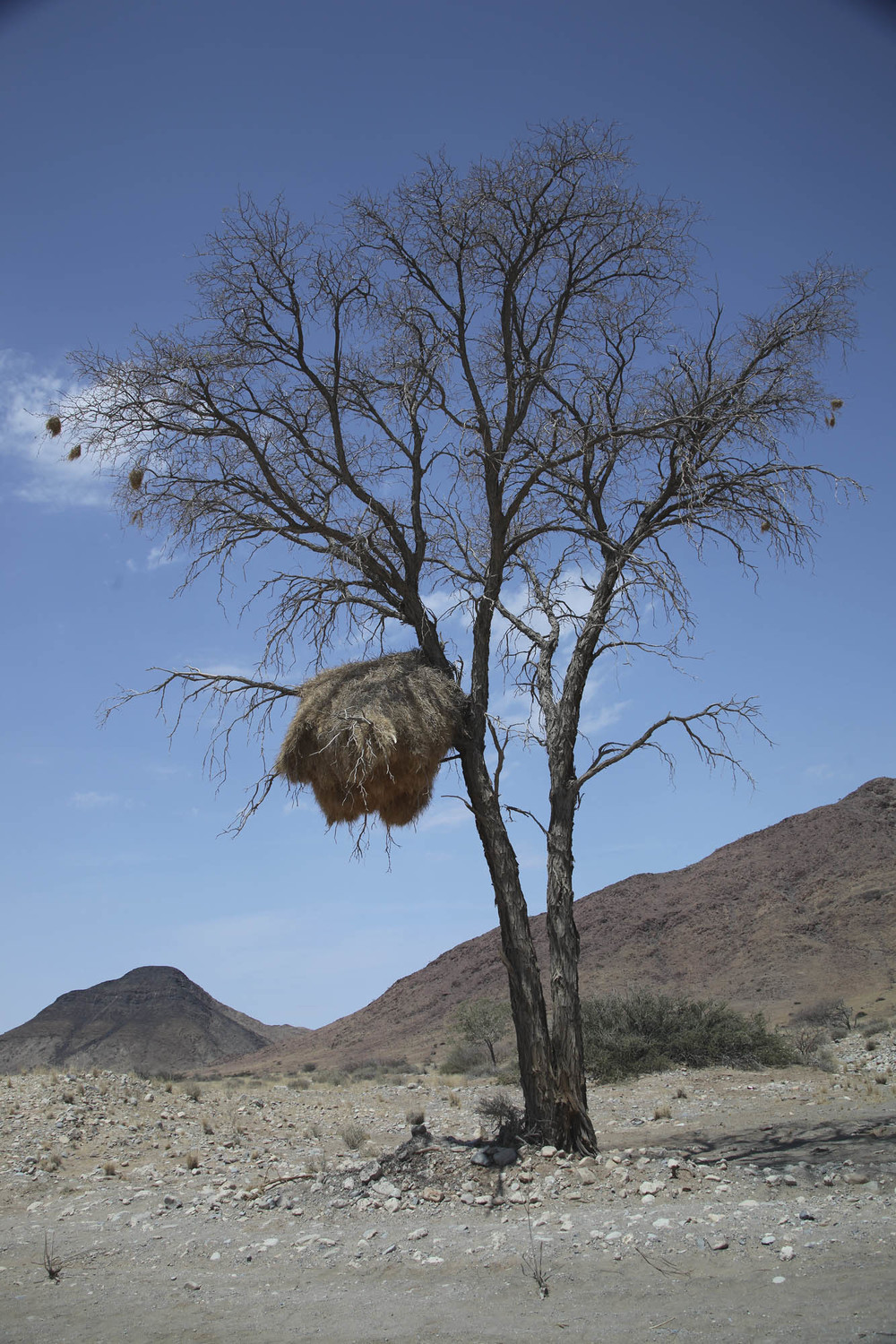 Tree with nest