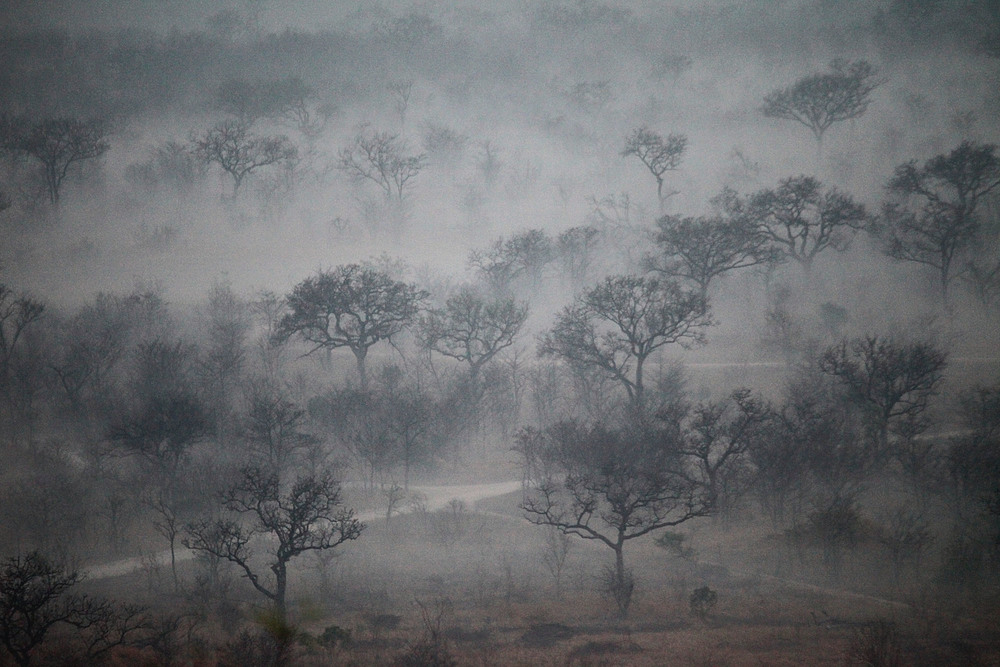 Fog shrouded trees on the veld