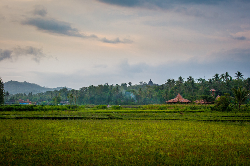 Looking across the paddy fields to Rumah Dharma and Borobudur in the distance.
