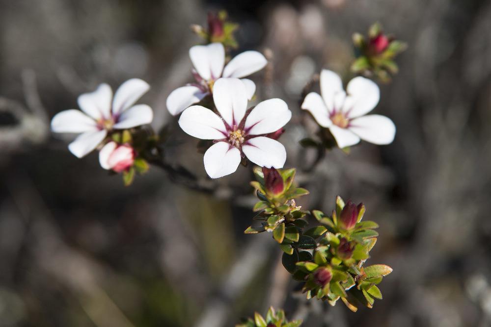 17050497-image_flowers3.jpg