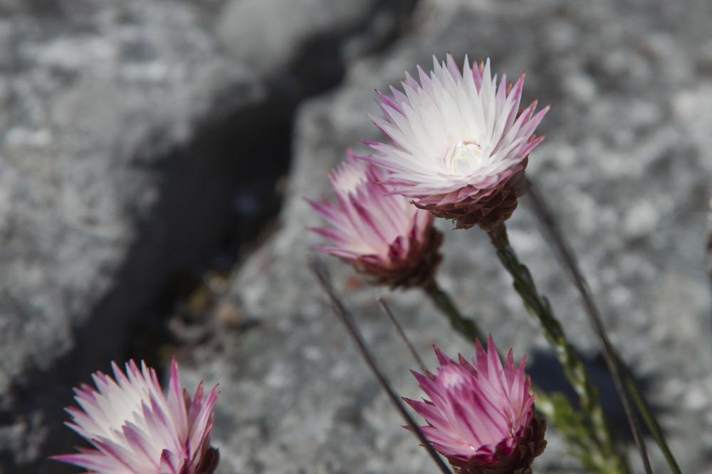 17050511-image_flowers2.jpg