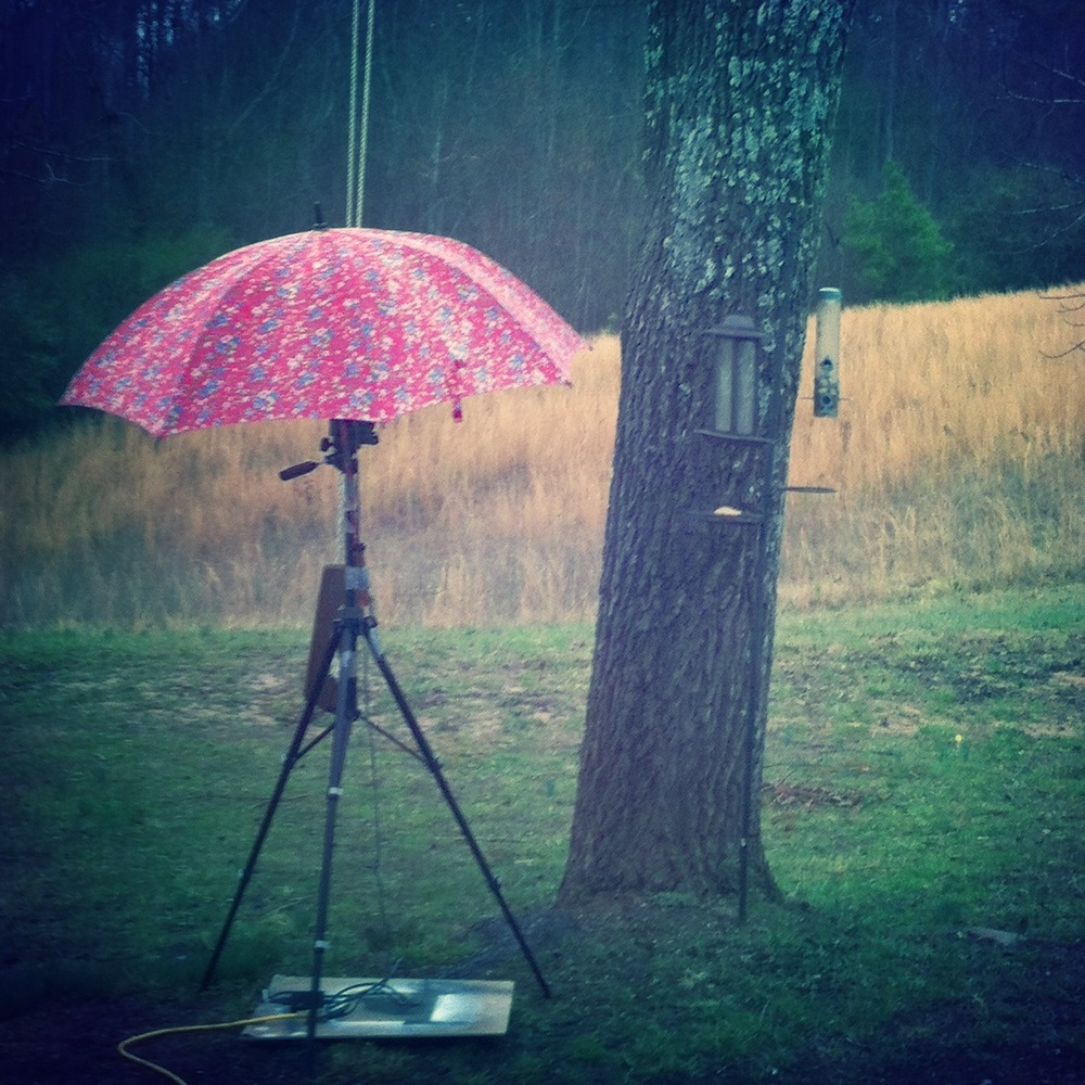 Rainy day bird videotaping set-up by King.