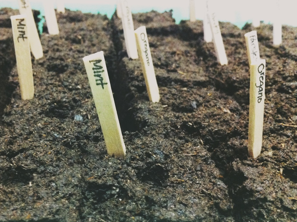 Plant Labels in Soil Blocks.JPG
