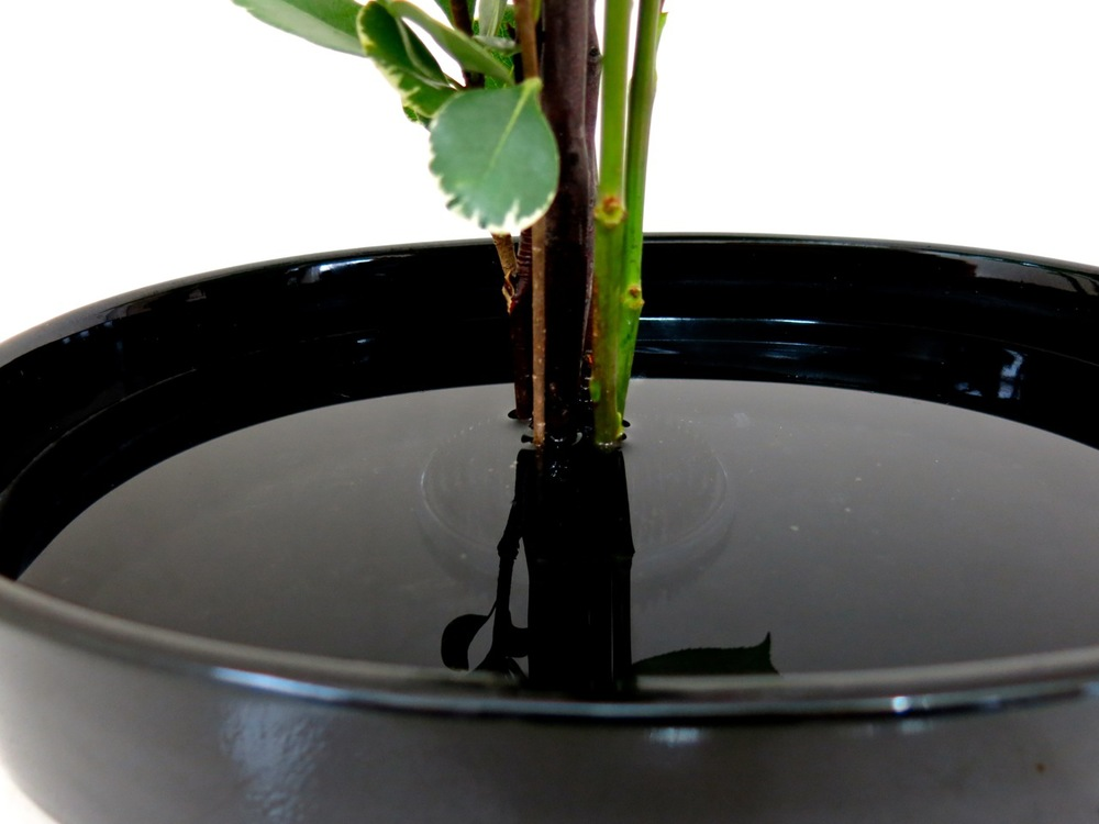 "The black kenzan does not reflect light.  It ""disappears"" when using a black container!"