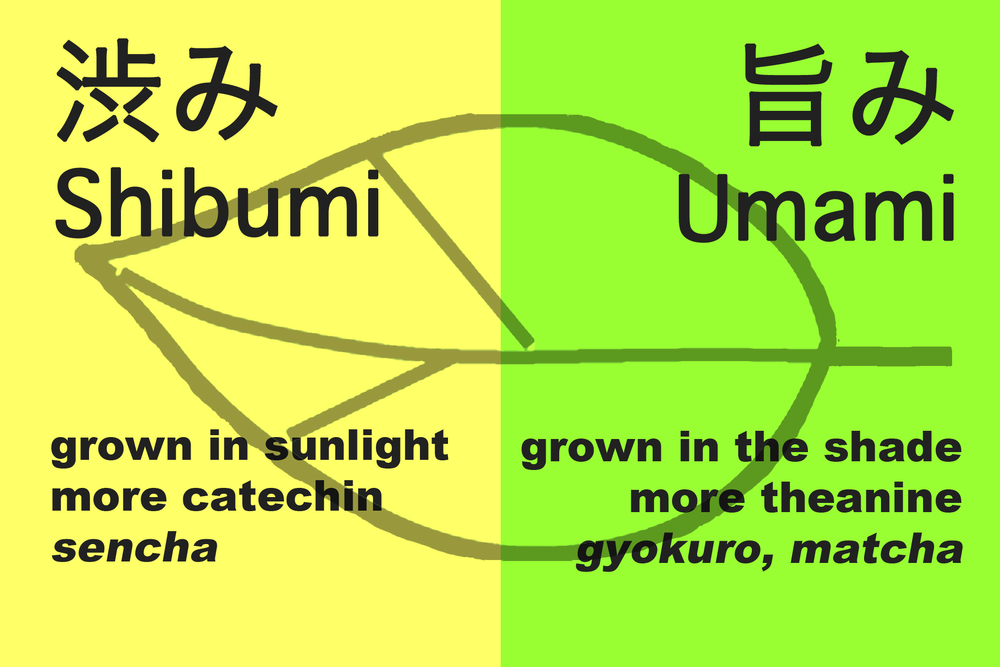 shibumi vs umami_edited-1.jpg