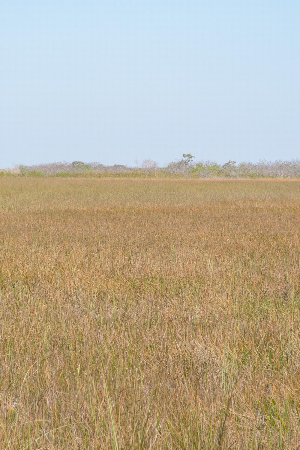 Grassland in Everglades