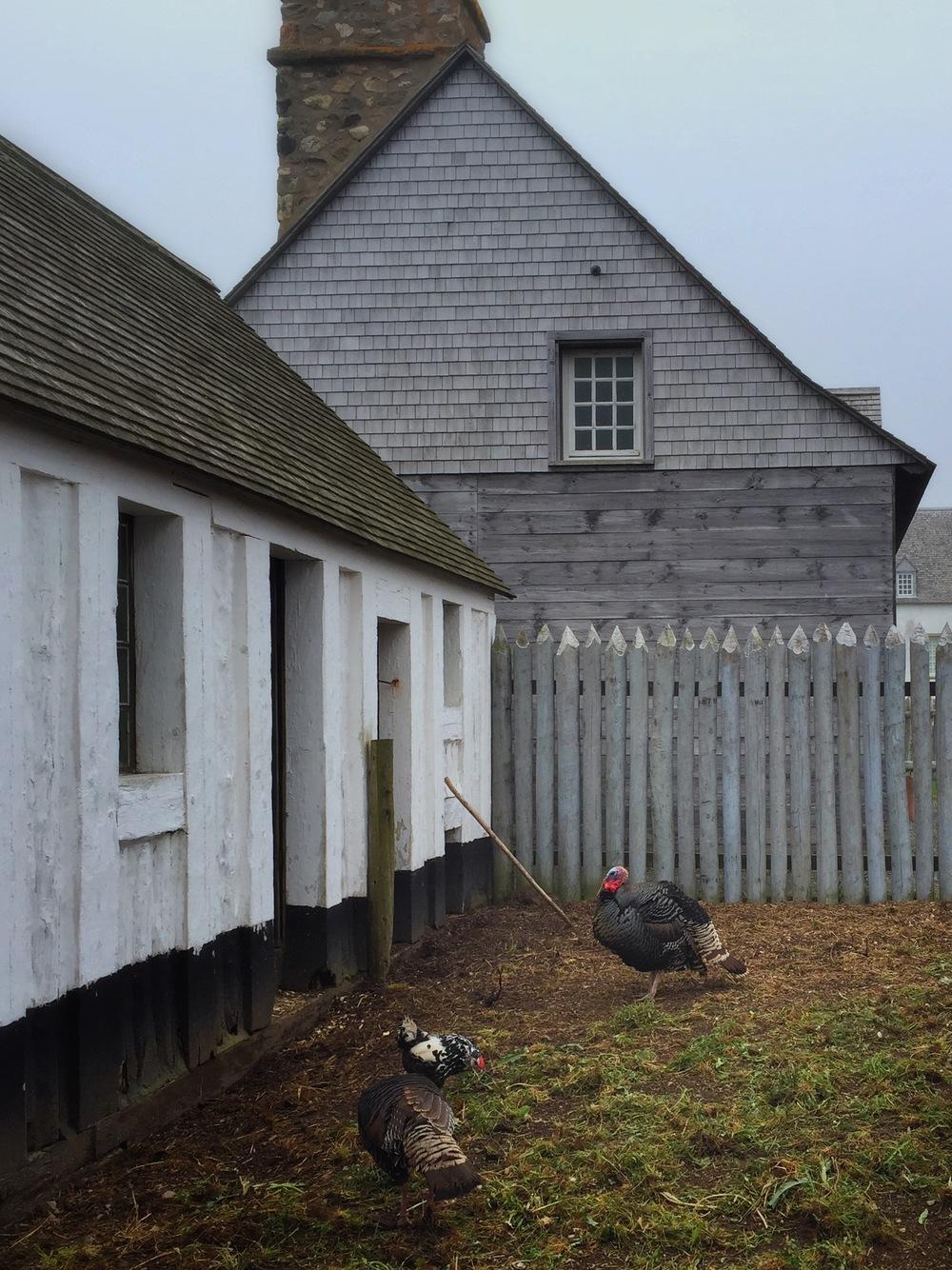 Chicken Farm in Louisbourg