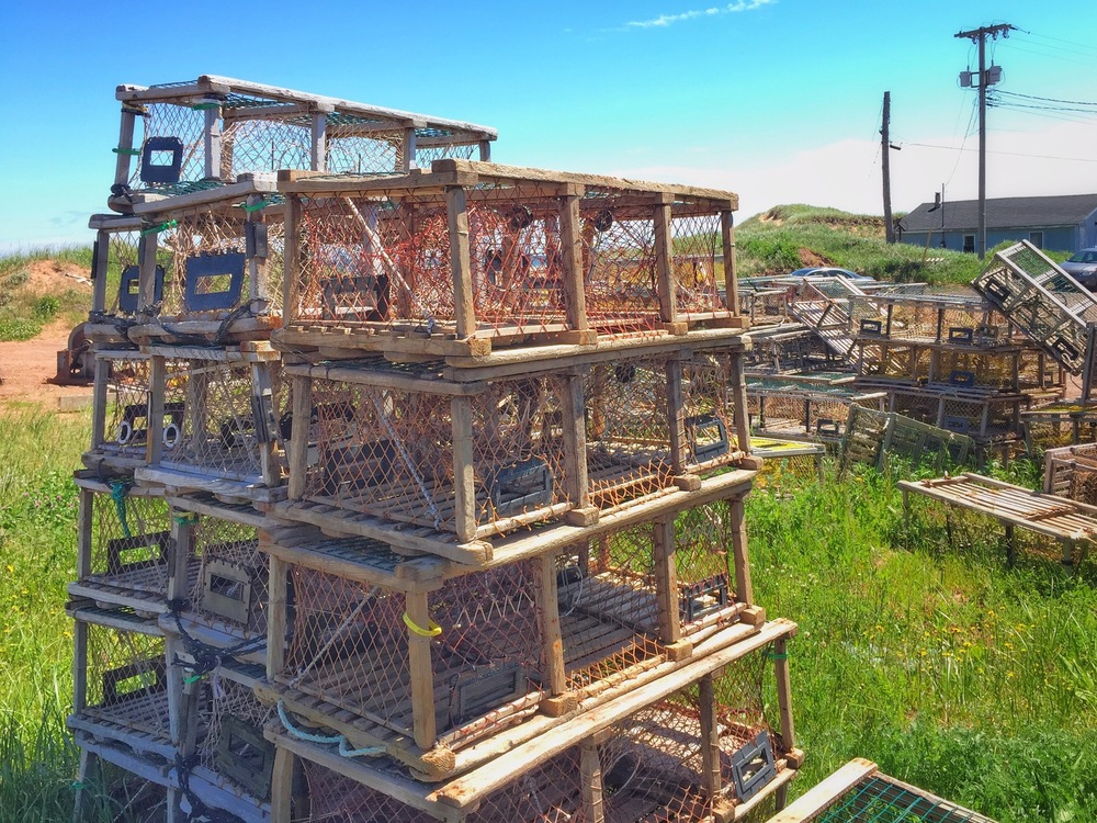 Lobster Traps
