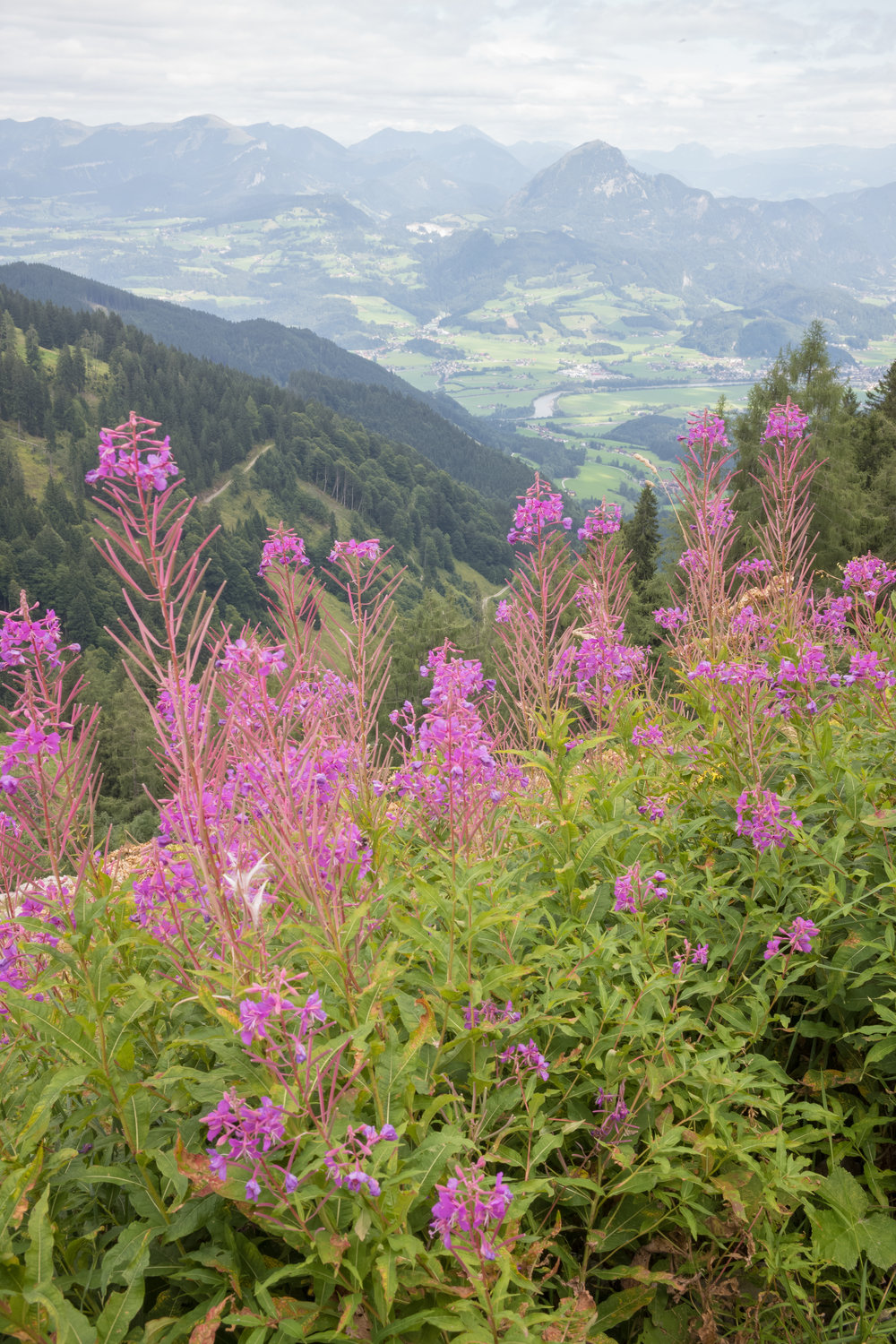 A View of Austria: A trail along a path up Hohen Göll to the Purtschellerhaus
