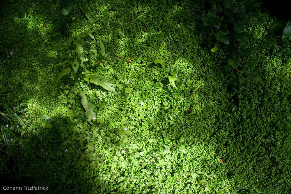 Moss in Mulranny